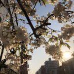 これからはコタツをしまうのは桜が散る頃にしようと思いました。