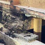 木材腐朽菌をご存じですか?